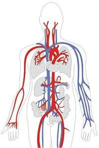 Омега-3 при беременности положительно влияет на организм