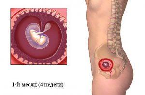 узи на 4 неделе беременности покажет, что у зародыша начала формироваться голова