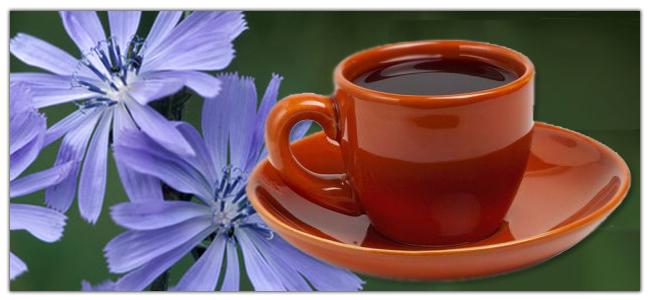 Цикорий при грудном кормлении - хорошая альтернатива кофе