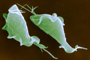Вагинит при беременности вызывают определенные виды микроорганизмов