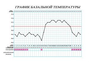 Базальная температура при беременности может быть повышена
