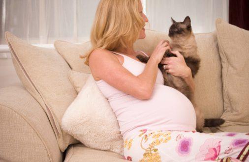 Токсоплазмоз у беременных - это паразитарная инфекция