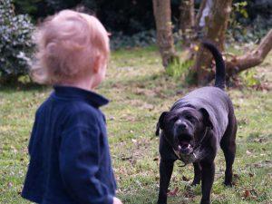 Собака лает на ребенка