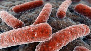 Туберкулез у детей вызывается палочкой Коха
