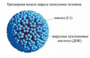 Причина бородавок 0 вирус папилломы человека