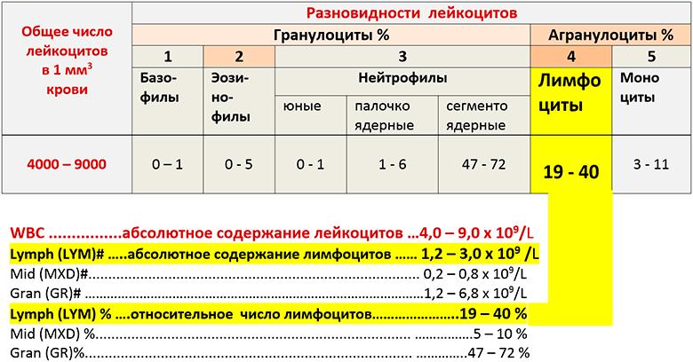Таблица лимфоцитов в лейкоцитарной формуле крови