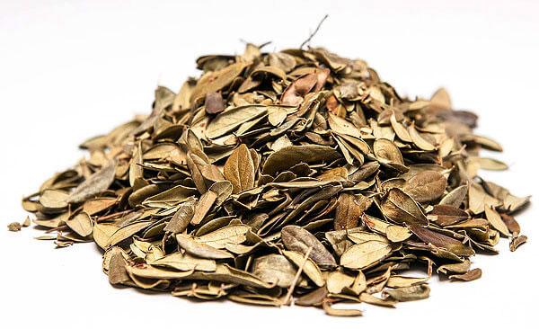 В частности, препараты на основе листьев могут вызывать отравление гидрохиноном.