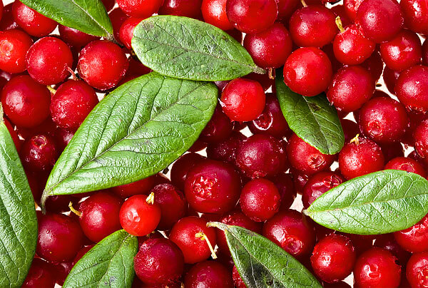 Даже небольшое количество этих ягод стимулирует диурез из-за действия на почки.