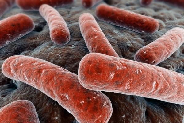 Палочка Коха провоцирует туберкульоз