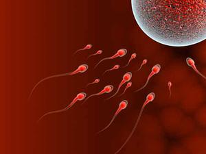 Когда начинается фертильный период у мужчин и женщин