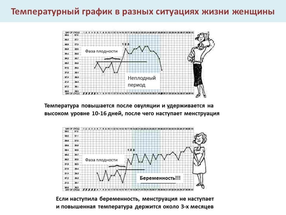 Базальная температура график