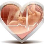 Каким должно быть сердцебиение плода на ранних сроках беременности?