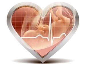 Сердцебиение плода