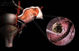 Овуляция в организме женщины