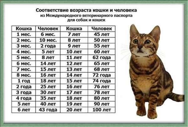 Кошке 10 лет