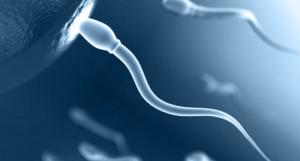 Стадии подготовки и сдача спермограммы