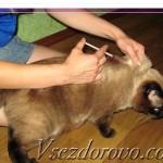 Как ПРАВИЛЬНО сделать подкожный укол коту