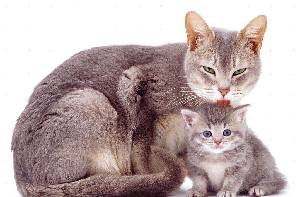 Уход за кошкой после родов