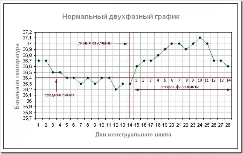 Двухфазный график цикла