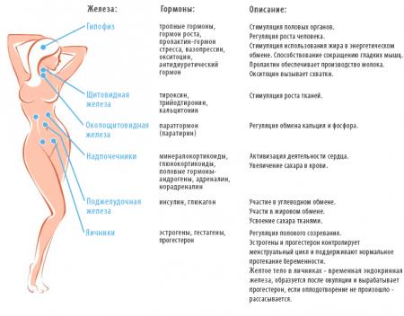 Гормоны, продуцируемые женским организмом
