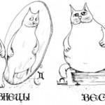 Особенности совместимости Близнецов и Весов