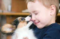 Как уговорить маму и папу купить собаку в квартиру если они категорически против?