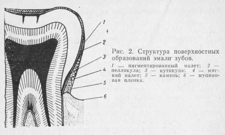 Развитие зубов