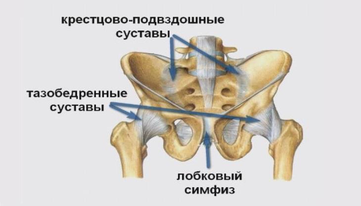 Лобковый симфизит
