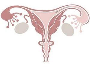 Рисунок матки и маточных труб
