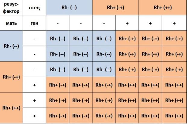 Таблица 2. Возможные варианты резус-фактора ребенка в зависимости от резуса родителей