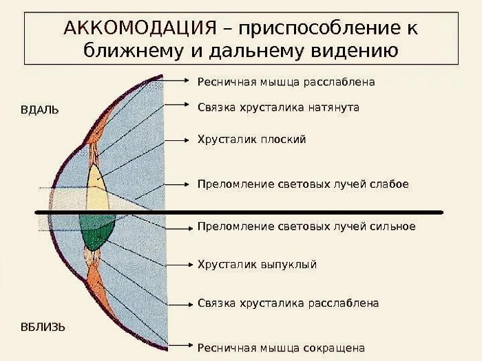 Аккомодация глаз