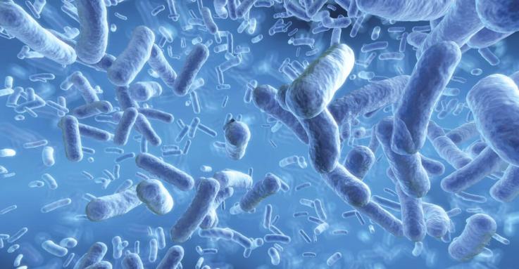 Состав нормальной микрофлоры кишечника у ребёнка