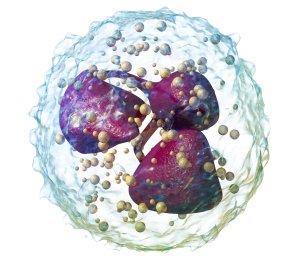 Понижены сегментоядерные нейтрофилы