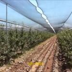 Современные системы ведения интенсивных садов яблони