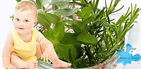 Какие травы можно использовать для повышения иммунитета у детей