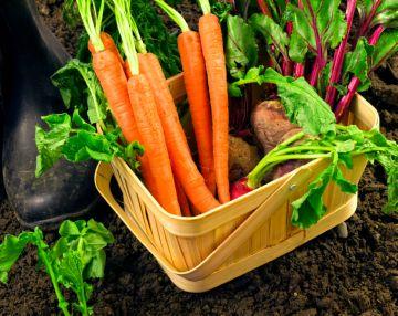 овощи для кормления кур